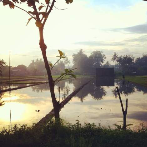 Rice Fields - Image by Kate Grealy